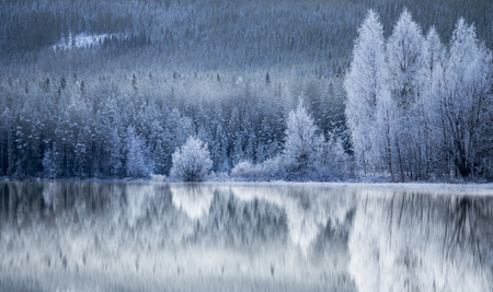 Reflection in ice of forest of conifers and birch trees covered in rime frost