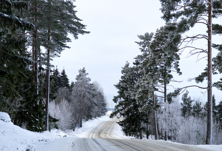 hoar: Scandinavian winter road lined with conifer trees