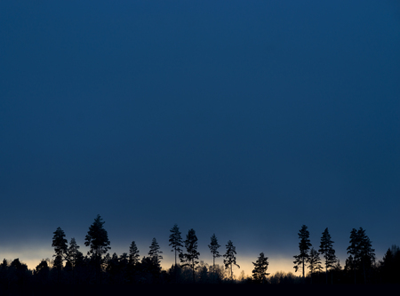 Silhouettes of trees on blue evening winter sky