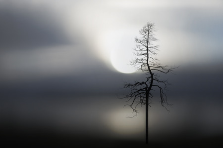 sparse: Sparse image with silhouette of bare tree and lake at sunset in background