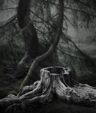 spooky forest: Dark forest with old tree stump and trees with moss in background Stock Photo