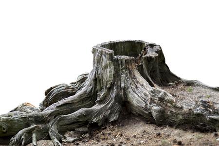 Oude verweerde boomstronk met wortel geïsoleerd op wit Stockfoto