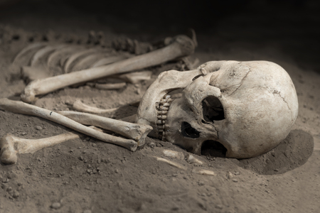 sapiens: skeleton with skull of human being on sand