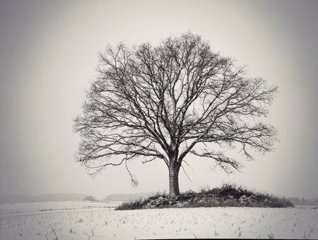 silhouette of bare oak tree in gloomy winter landscape Banque d'images