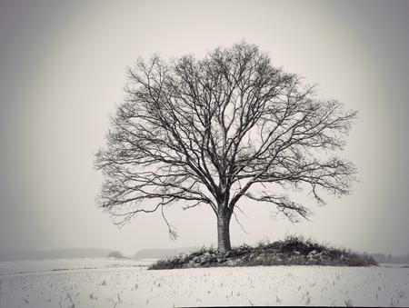 silhouette of bare oak tree in gloomy winter landscape Фото со стока