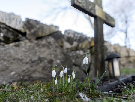 graves: Snow drops by simple cross on grave in cemetery in early spring Stock Photo