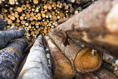 sawed: stack of trunks of pine trees at sawmill