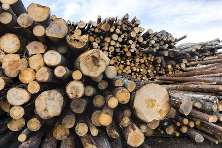 sawed: stack of tree trunks in scandinavian forest
