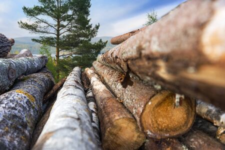 sawed: stack of tree trunks, with scandinavian forest landscape in background Stock Photo
