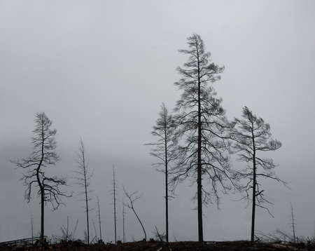 Silhouettes of trees on gloomy gray sky
