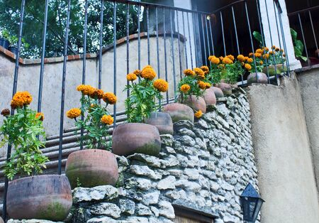 cempasuchil flowers and a stair
