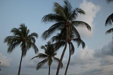 Acapulco breach palmtrees nice sky