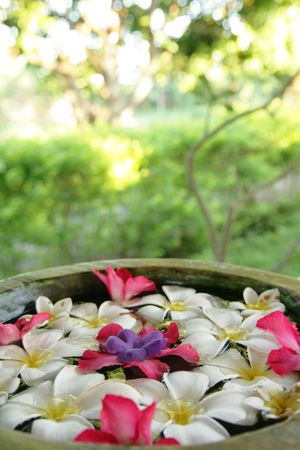 Flowers for aromatherapy floating in a bowl