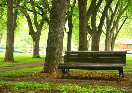 city alley: Bench in a park and old trees Stock Photo