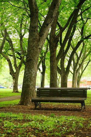 Single bench in a quiet park surround by old trees photo