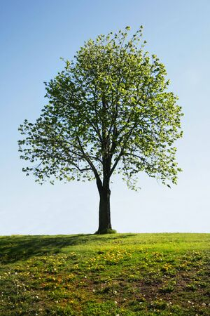 Einzigen Baum