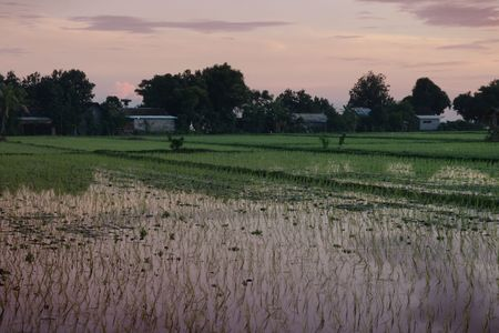 Paddy field in Bali, Indonesia, during sunrise Stock Photo - 7157666