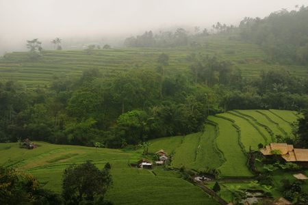 Green terraces paddy field in Bali, Indonesia photo