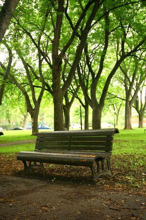 Één bank in een park met oude bomen