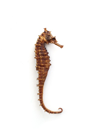 sea mammal: Brown and dried seahorse on a wooden table