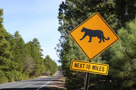 Puma road sign in Arizona, United States photo
