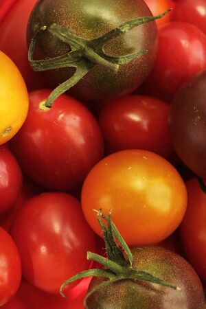 Close up of  different kind of cherry tomato orange, yellow and purple