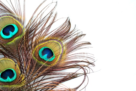 peacock eye: Three peacock feathers on a white background Stock Photo