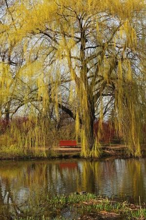 しだれウィロー瞬間を楽しんだり寛いだりする座席を使って水の反映 写真素材