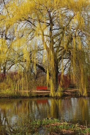 Weeping willow reflecting in a water with a seat to relax or enjoy the moment photo