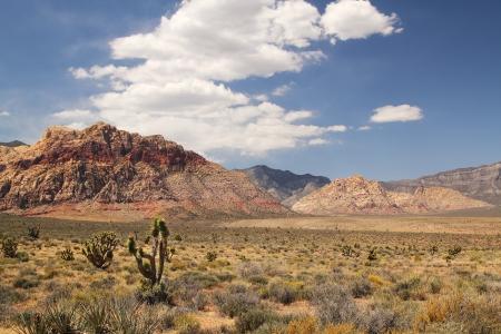 joshua: Panorama with joshua tree at red rock canyon in Nevada Stock Photo