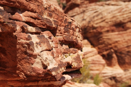 Red rocks at red rock canyon in Nevada, united states photo