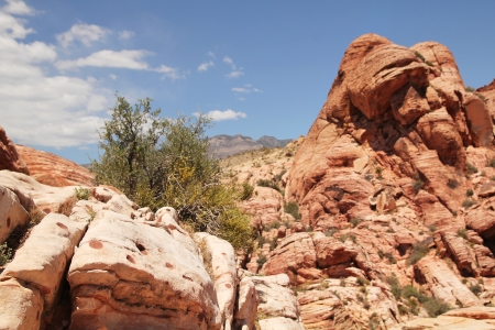 Red rock formation at red rock canyon in Nevada, united states photo