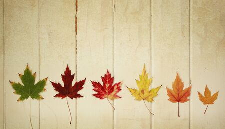 Six maple leaf on a row on a wooden vintage background photo