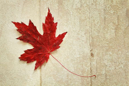 Red maple leaf on a vintage wood background photo