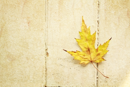 Yellow maple leaf on a vintage wood background photo