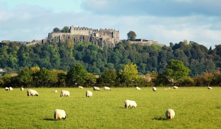 scots: White sheep graze with Stirling castle in background