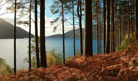 loch: Trees and fern during autumn in front of Loch Lomond, Scotland, UK.