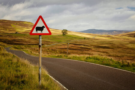 slowdown: Sheep roadsign of a rural road into the Cairngorms, in Scotland, UK