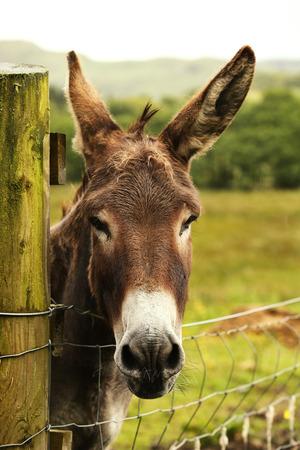 baby ass: Cute donkey looking at the camera