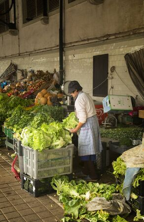 portugal agriculture: PORTO-PORTUGAL NOVEMBER 4, 2015: Old woman cutting and preparing lettuce in a market in Porto, Portugal