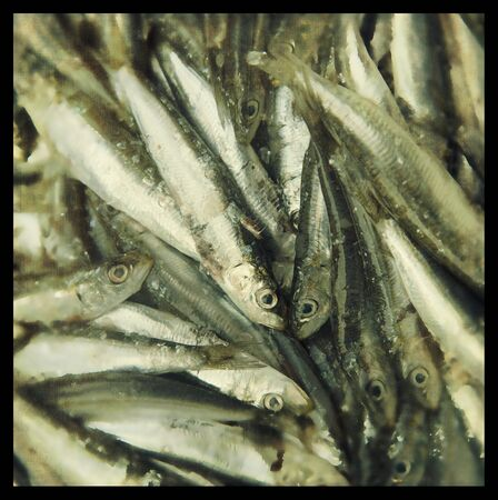 cross processed: Fresh sardines in a market for sale.  Cross processed to look like an used picture with texture. Stock Photo