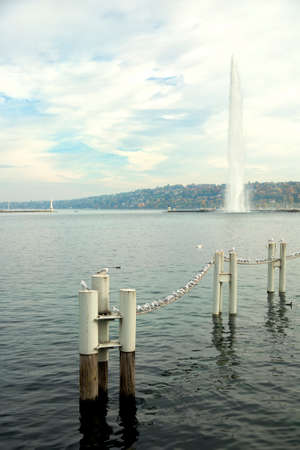 leman: Seagulls on line on Leman lake in Geneva, Switzerland
