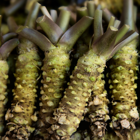 Fresh wasabi roots to make japanese food