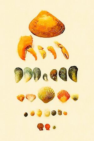 Digital watercolor of a collection of seashells, claws, mussels and snails