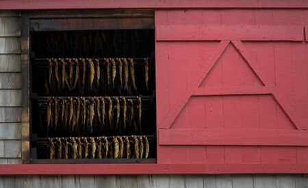 Fresh smoked herring in a red house in Magdelan island in Canada