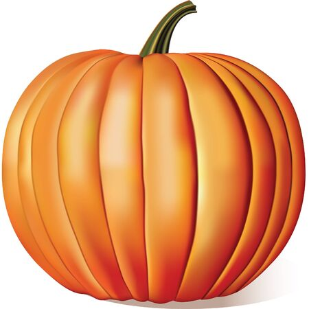 Ripe Pumpkin Isolated on white Stock Vector - 9650437