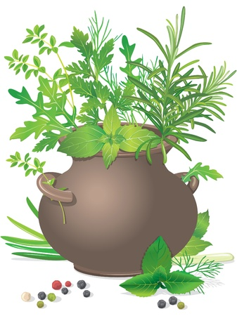 Bouquet fresh herbs in ceramic pot on white Stock Vector - 9931545