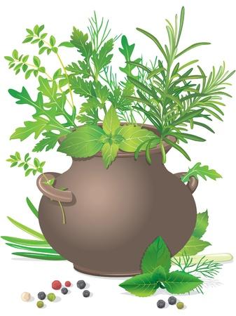 basil herb: Hierbas frescas bouquet en bote de cer�mica en blanco