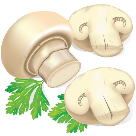 mushroom illustration: Field mushrooms and parsley