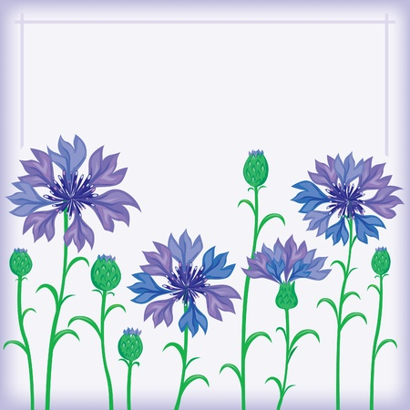 cornflower: Flower border of cornflowers